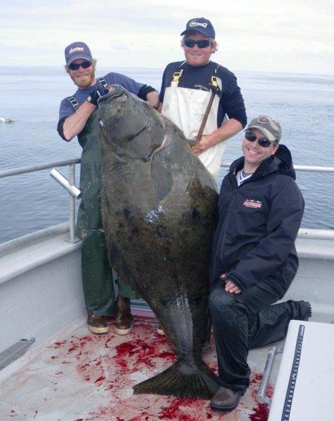 Crackerjack charters south central alaska my alaskan for Halibut fishing homer