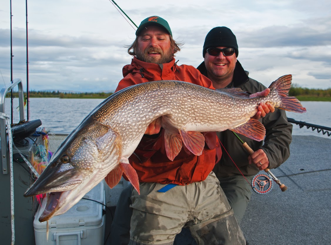 Pike fly fishing for Fishing for northern pike