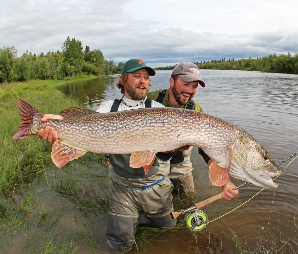 Image gallery trophy pike for Fishing for northern pike