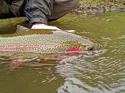 Rainbow trout fishing is excellent in our Alaska river system all summer long.