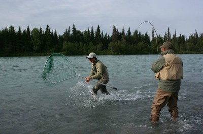 Bringing in a Sockeye!