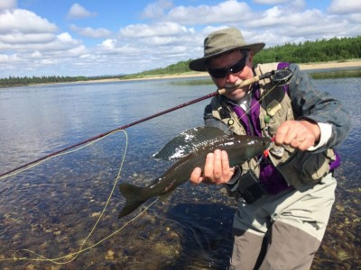 Arctic Grayling on Dry Flies