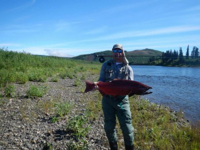 Anvik River King Salmon on a fly