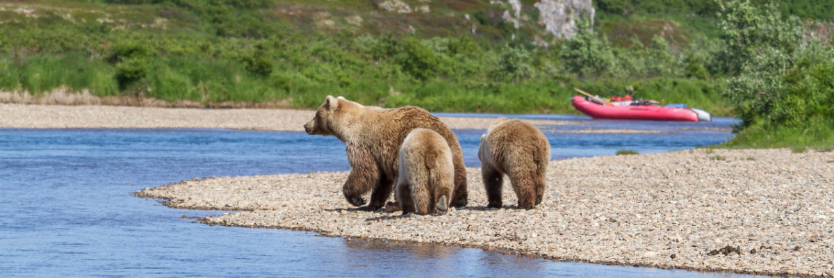 Moraine Creek - Bears