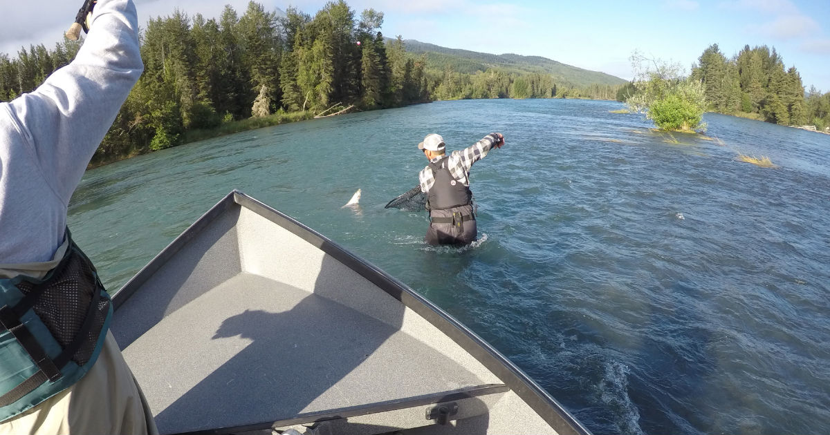 Fly Fishing for Beginners - What to Expect From Your Kenai River Guide