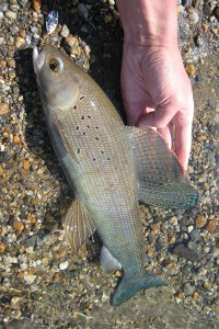 Artic Grayling Fishing