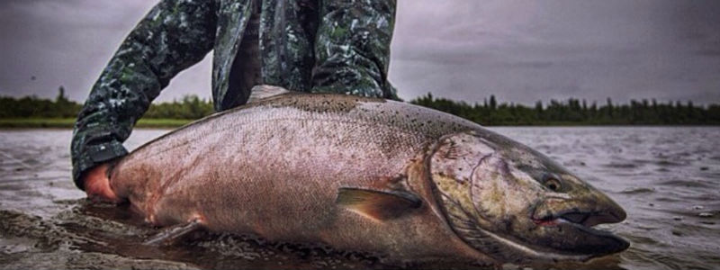 Fly Fishing for Salmon in the Bristol Bay Watershed